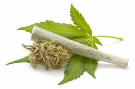 high risk kids, marijuana use, CBT sessions