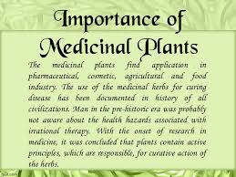 importance of medicinal plants essay definition paraphrasing  ayurveda