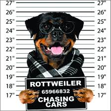 Rottweiler Size Chart Usually Ships Within 5 Business Days Refer To Size Chart