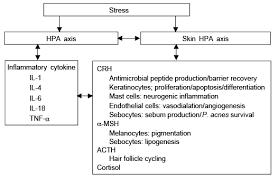 Hpa Axis Expression Of Hypothalamic Pituitary Adrenal Axis In Common Skin