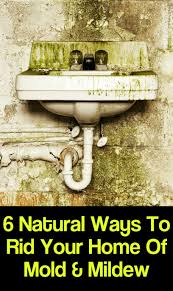 6 natural ways to rid your home of mold mildew 1