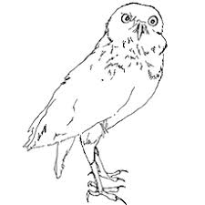 owl coloring pages free printable. Modren Pages And Owl Coloring Pages Free Printable L