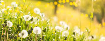 Іменини 10 квітня день ангела відзначають: 10 Kvitnya 2020 Roku Yake Sogodni Svyato Prikmeti Ta Den Angela Ukrayina Tch Ua