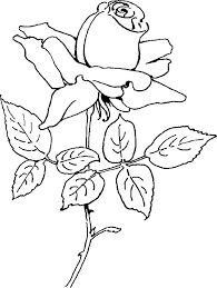 rose 05 coloring page for kids and s from natural world coloring pages flowers coloring pages