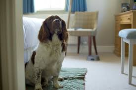 bell inn luxury dog friendly hotel new forest hshire