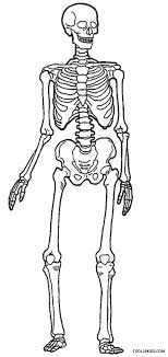 Small Picture Anatomy Coloring Pages Skeleton Printable Coloring Sheets