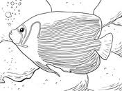 Small Picture Flame Angelfish coloring page Free Printable Coloring Pages