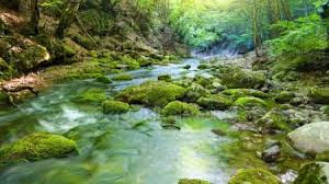 Image result for river deep