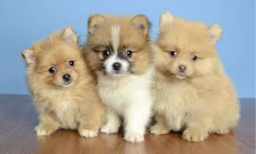 Image result for images puppies