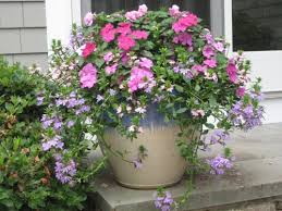 Small Picture 37 best container garden images on Pinterest Flowers Garden