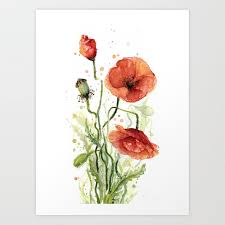 red poppies watercolor art print by
