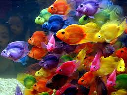 Small Picture 73 best African cichlids images on Pinterest African cichlids