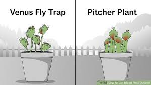 how to get rid of flies outside 15 steps with pictures