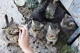 Celebrate National Cat Herders Day