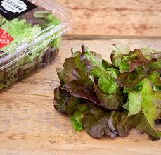 Red Oak Leaf Gotham Greens Premium Quality Locally Grown