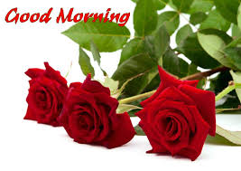 good morning rose flower wish friends pics mojly images good morning