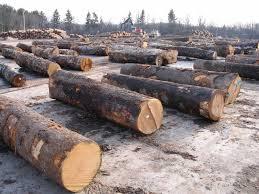 Timber Purchasing Log Purchasing In Ny Pa Gutchess Lumber