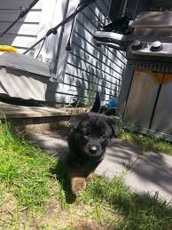adoption fee puppy rate