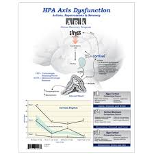 Hpa Axis Hpa Axis Dysfunction Presentation Pad The Lifestyle Matrix
