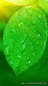 nature green leaf iphone 5 hd wallpaper