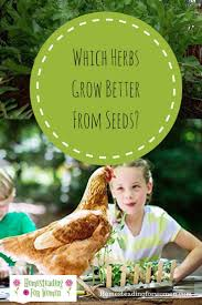 Unwins Kitchen Garden Herb Kit 17 Best Ideas About Herb Garden Kit On Pinterest Vertical Garden