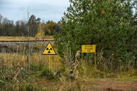 Chernóbil y Fukushima, ¿nuevos santuarios de fauna o cementerios de  animales que huyen de los humanos?