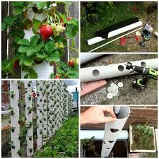 view in gallery diy strawberry tower from pvc pipe 2 diy vertical pvc planter simple space saver for