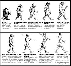 Human Evolution Timeline Chart Human Evolution Timeline Home