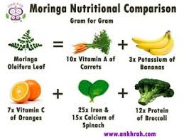 What Is Moringa Ankh Rah