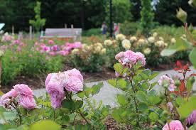 new rose garden
