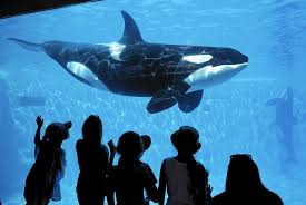 SeaWorld may be bouncing back from \u0027Blackfish\u0027 backlash - LA Times