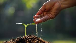 Image result for planting seeds idea