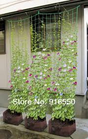 7 Best Climbing Plants For Trellis And Arbor Images On Pinterest Climbing Plant Trellis