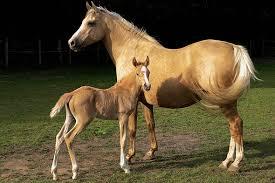 Kolik stojí kůň? – 1.část – ZOO Magazín