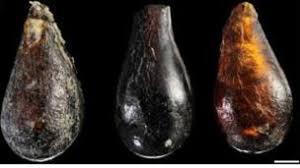 Bbc - 'ancient Triassic News Amber Yields Mites'