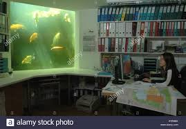 office aquarium. Young Woman In An Office With A Koi Carp Aquarium M