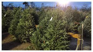 Boys and Girls Club Christmas tree sale underway