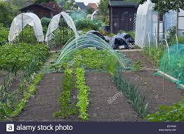Kitchen Garden Vegetables Plastic Tunnels And Herbs And Vegetables Growing In Kitchen Garden