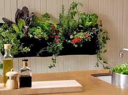 indoor gardening. Where Can I Buy Indoor Gardening Supplies? E