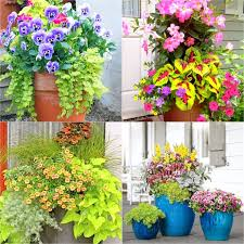 colorful mixed pots flower gardening