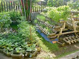 preppers garden container gardening