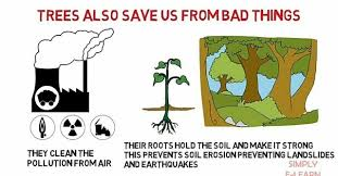 Importance of Planting more Trees. — Steemit