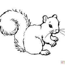Squirrels Coloring Pages Free Coloring Pages Red Squirrel Coloring