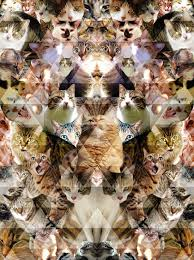 cats collage wallpaper. Interesting Wallpaper Cats1 Intended Cats Collage Wallpaper