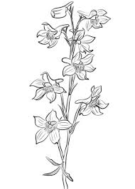 Small Picture Delphinium Flower Coloring Pages RealisticFlowerPrintable