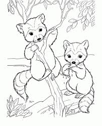 Small Picture Free Cute Raccoon Cartoon Animal Coloring Pages Printable Animal