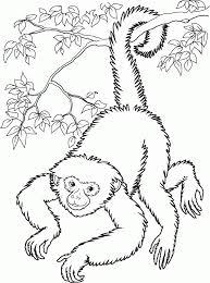 20 Dessins De Coloriage Singe Imprimer Imprimer Dessin A Colorier Gorille A Imprimer Voir Le Dessin L