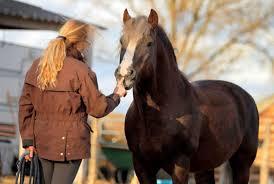 Mag Jouw Paard Nee Zeggen Horseconnect