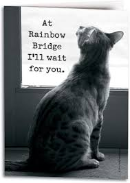 Loss Of A Cat Quotes Impressive Rachael Hale Guiness Cat Framed Sympathy Cards Show Compassion For