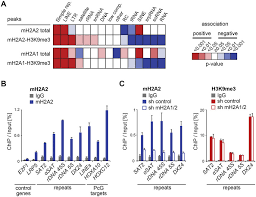 Macroh2a2 Is Enriched On Constitutive Heterochromatin